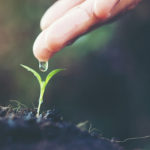 close up woman hand watering a green young plant
